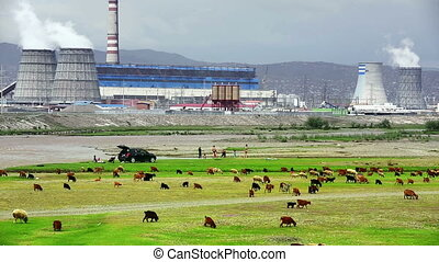 Animals grazing next to power plant