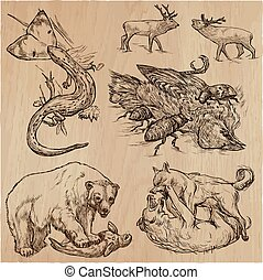 Animals in action, Predators - An hand drawn vector illustrations. Collection.