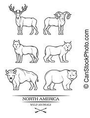 Animals in North America.
