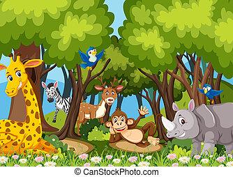 Animals in the jungle