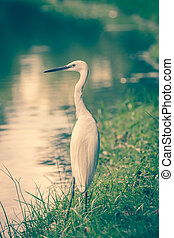 Animals in Wildlife - White Egrets. - Animals in Wildlife. ...