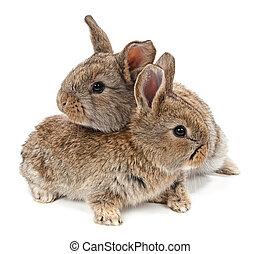 animals., konijn, vrijstaand, op, een, witte achtergrond