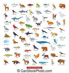 Animals of North America Collection. Cartoon style vector illustration
