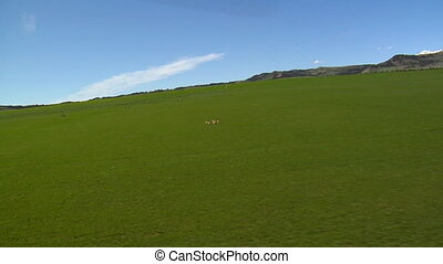 Animals sprint accross a wide green meadow near mountains