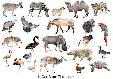 animals - Collection of wild animals