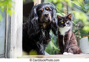 animals - Cat and dog sitting on the windowsill
