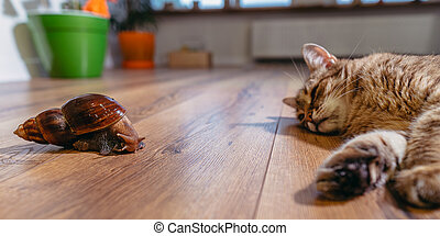 Animals. The cat is watching the snail.
