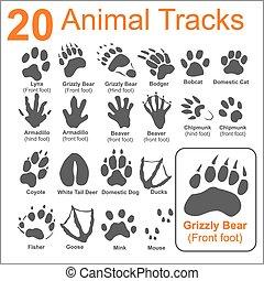 Animals Tracks - vector set