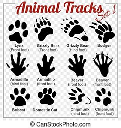 Animals Tracks - vector set,