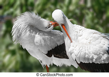 animals two birds beautiful white cranes - Image animals two...
