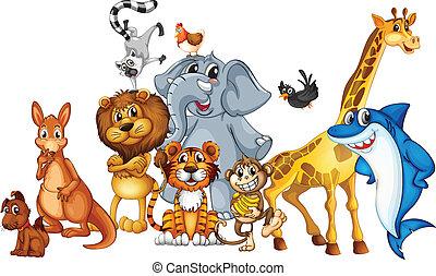 Animals - Illustration of many animals standing