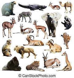 animals., vrijstaand, set, witte , afrikaan