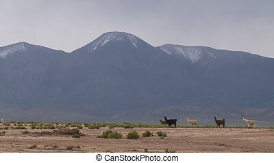 A long shot of animals walking on a valley at the base of a range of mountainous land