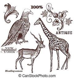 animals.eps, húzott, vektor, gyűjtés, kéz