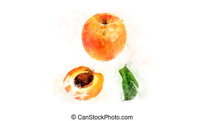 Animated appearance of watercolor Apricot on the alpha...