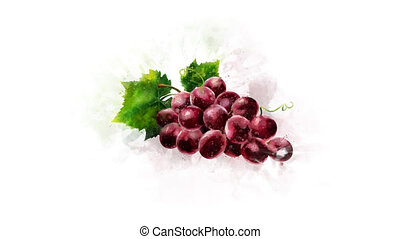 Animated appearance of watercolor Grape on the alpha channel...