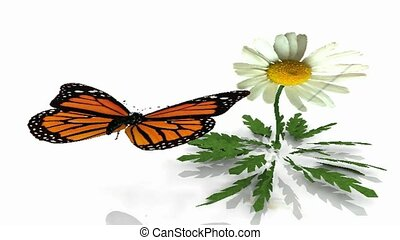 Animated, butterfly, daisy