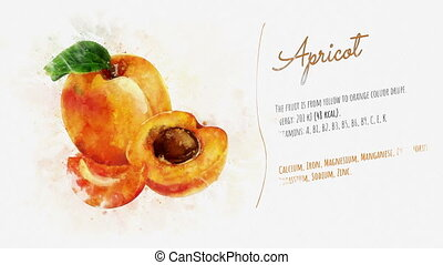 Animated card of Apricot with a list of its useful...