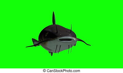 Animated catfish with green screen