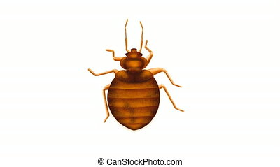 Animated clip of a bed bug on a white background.