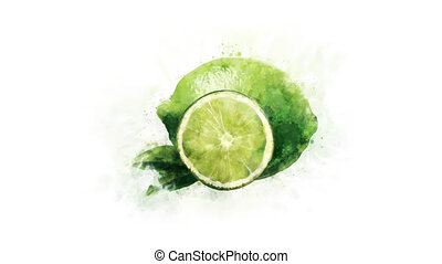 Animated illustration of Lime - An animated watercolor...