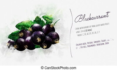 Animated information about the benefits of Blackcurrant