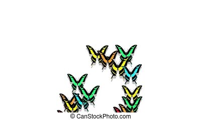 animated multicolored butterflies arrive, make up an inscription number 0