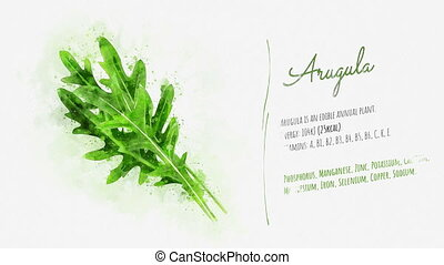 Animated slide about the useful properties of Arugula -...