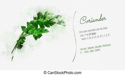 Animated slide about the useful properties of Coriander - ...