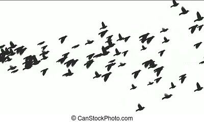 animation, de, oiseaux