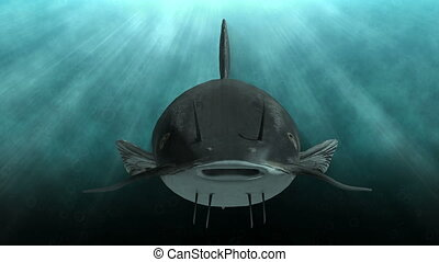 Animation of a catfish in clear blue water