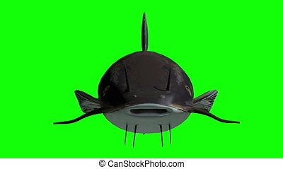 Animation of a catfish with green screen