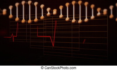 Animation of a DNA strand rotating with heart beat rate ...