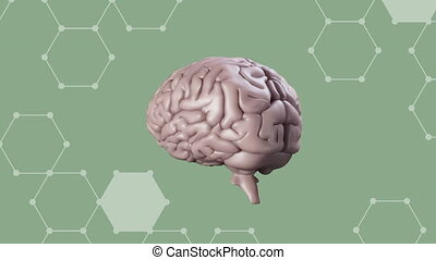 Animation of a human brain rotating on a green background