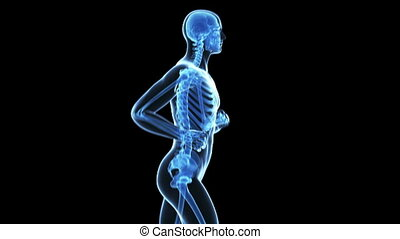 Animation of a jogger - Medical animation of a jogger -...
