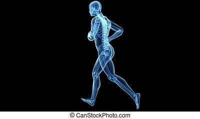 Animation of a jogger - Medical animation of a jogger