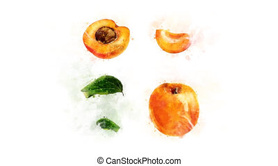 Animation of Apricot with spreading ink - Animation of the...