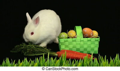 Animation of cute white Easter bunny with green basket with patterned Easter eggs