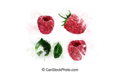 Animation of drawing Raspberry and its parts - Animated...