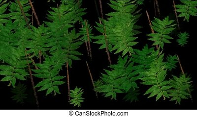 Animation of green leaves, coniferous