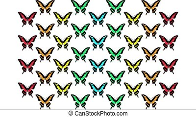 animation of multicolored butterflies on white background
