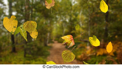 Animation of multiple autumn leaves falling in seamless loop over out of focus forest in the foreground. Seasons change concept digitally generated image.