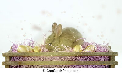Animation of multiple golden particles floating over cute Easter bunny and golden Easter eggs in rustic wooden box and purple shredded paper on white background. Easter celebration tradition concept digitally composite.