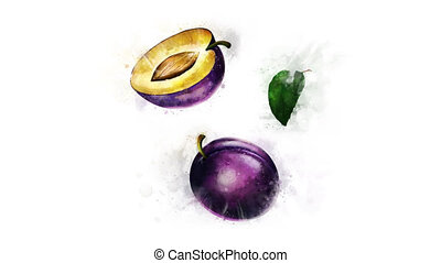 Animation of Plum with spreading ink - Animation of the...