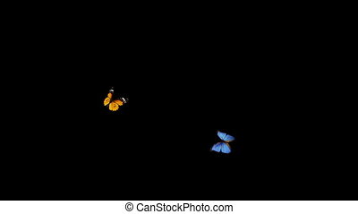 two butterflies - Animation of two butterflies