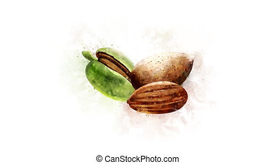 Animation of watercolor drawing of Almond - Beautiful...