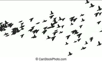 animation, von, vögel