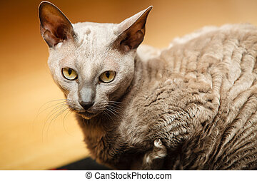 animaux, à, home., égyptien, mau, chat