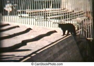 animaux, (1970), zoo