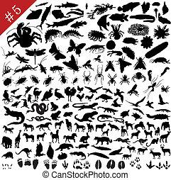 animaux, 5, #, ensemble, différent